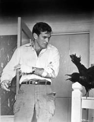 taylor-birds